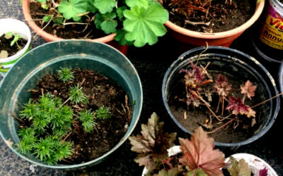 Outdoor Plant Sale: Sat., May 23,10 am to 1 pm